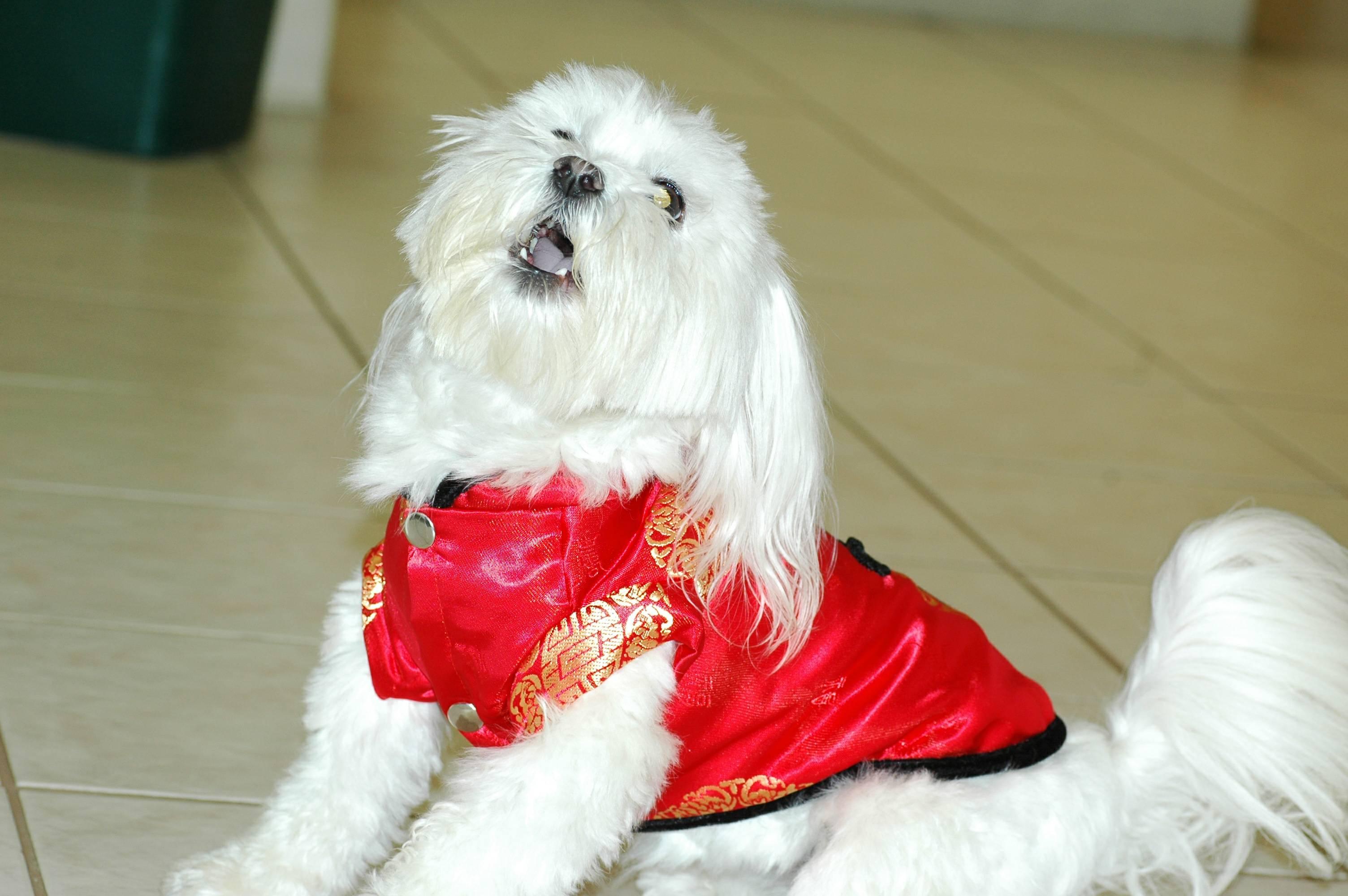 04-00-china dog1